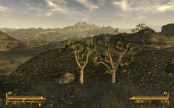 The Mohave Wasteland